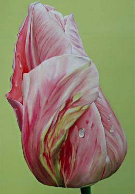 Tulpe einzeln